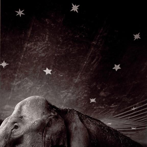 Carter_plate21_ElephantandStars_2001s