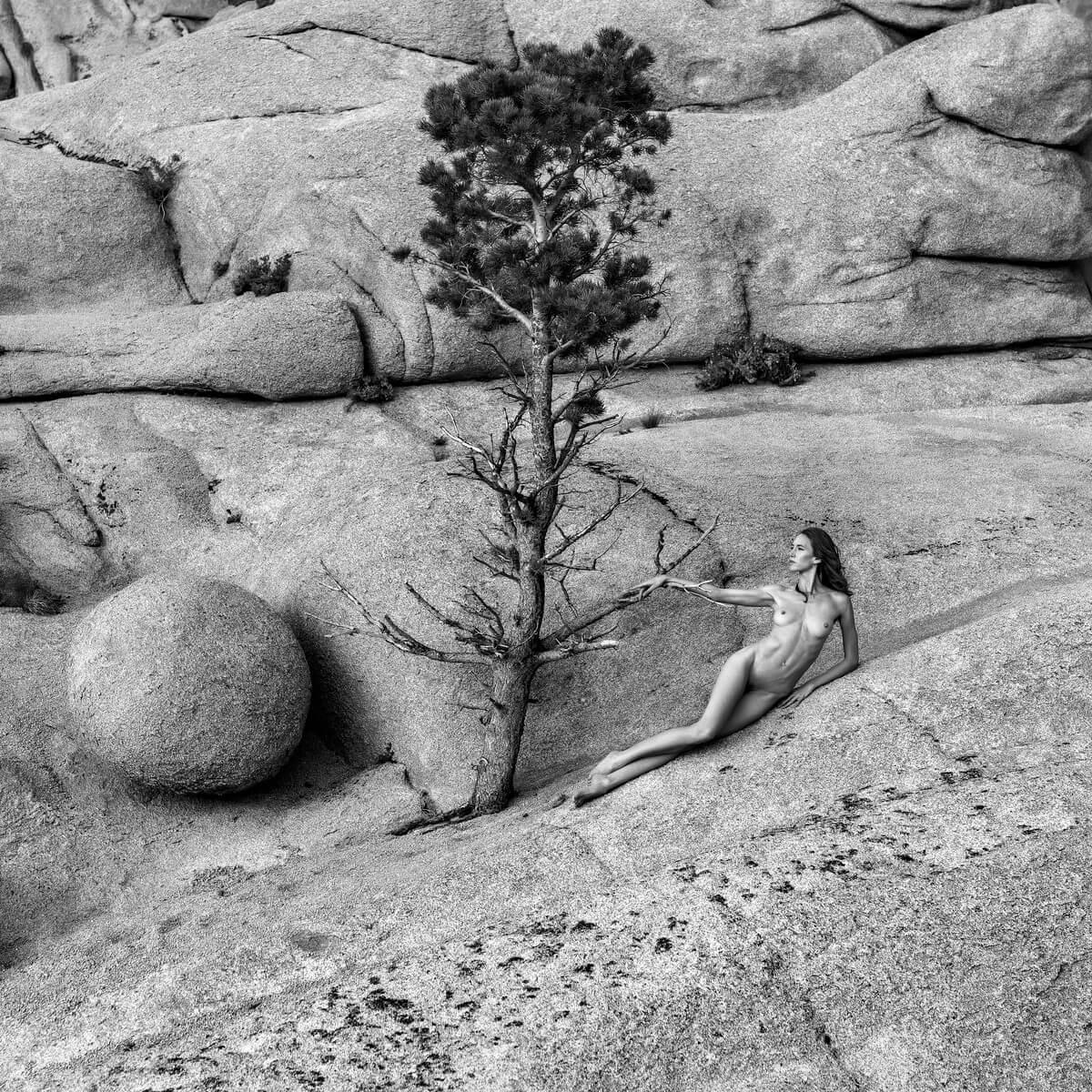 TH2019-2928-Lone-Pine-Tree
